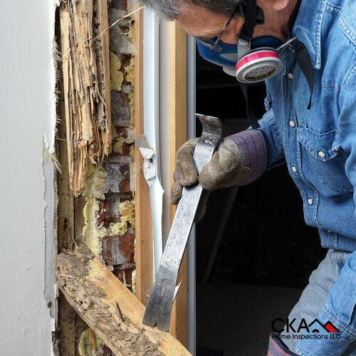 A Technician Inspects a Termite Infestation.